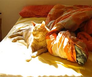 Sunbathing Cat Time Lapse